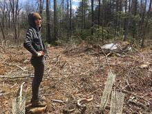 Eli Ward collecting data at her research plots at Yale-Myers Forest, Eastford, CT. Photo: Eli Ward.