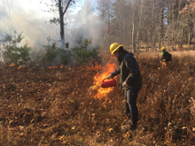 Genevieve Tarino ('22 M.F.) and James Puerini ('21 M.F.) set fire and observe its spread in the shrub meadow at Yale-Myers Forest in November 2020.