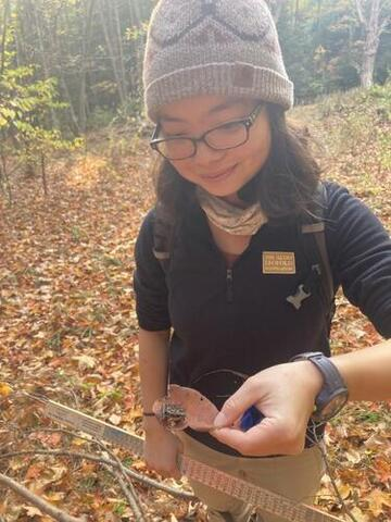 First year MFS Eudora Miao pauses with a frog during field work at Yale-Myers Forest. Photo courtesy of Jess Lloyd '20 MF.