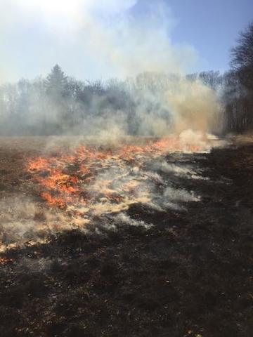 Prescribed burn in Connecticut