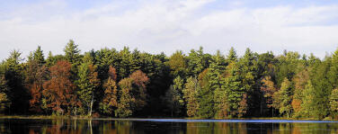 Forest next to a lake with cloudy skies in the background.